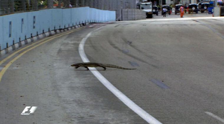 monitor-lizard-f1-singapore